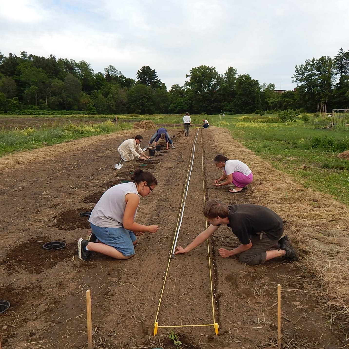 Volunteers And Interns Plant Green Beans In The Expanded Giving Garden