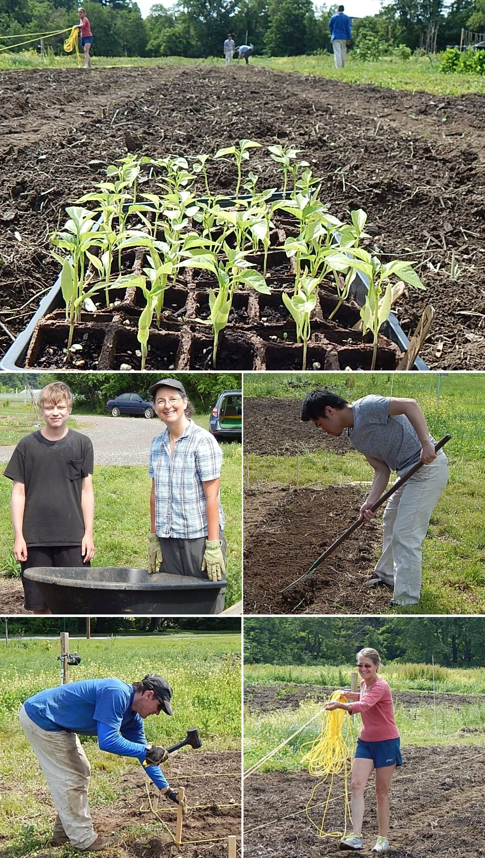 4,000 Square Feet Of New Ground, With Volunteers Growing Food For Soup Kitchens.