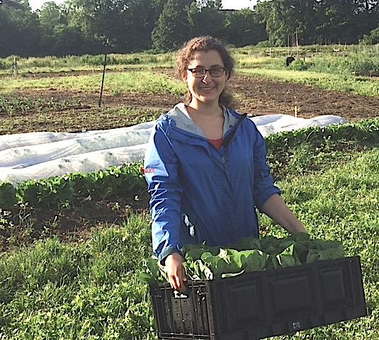 Rachel -first harvest (crop)