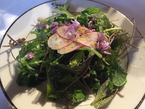 A green salad on a white plate, topped with radished, small purple flowers, and shaved yellow cured egg yolk